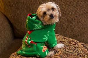 Christmas Sweaters Dogs