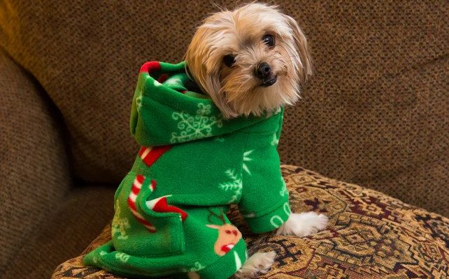45 Best Christmas Outfits for Large Dogs , Cheap Dresses for