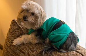 New Year Sweater For Dogs